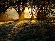 Oxfordshire - frosty morning - photo by net_efekt via Flickr