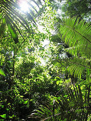 Cuyabeno Reserve forest - Ecuador - photo by Mikko Koponen via Flickr