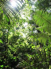 Cuyabeno Reserve forest - Ecuador - photo by Mikko Koponen via Flickr