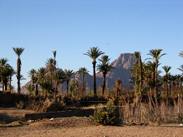Oasis in the Ahaggar - Sahara - Algeria - image by Bertrand or Florence Devoud via Wikimedia Commons