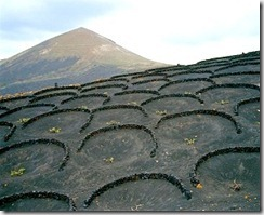 Vineyard - Lanzarote - Canary Islands - photo by Laurent Gauthier via Flickr