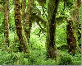 Olympic Peninsula rain forest - Washington State - USA - photo by John Walker via Flickr