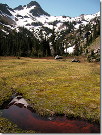 Olymic Mountain Range meadow - Washington State - USA - image via US National Park Service