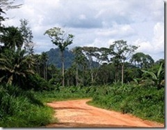 Tropical forest in Liberia - photo by The Advocacy Project via Flickr