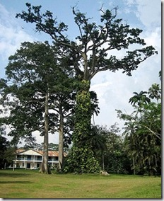 Aburi Botanical Gardens near Accra - Ghana - photo by Erik Cleves Kristensen via Flickr CC by 2.0